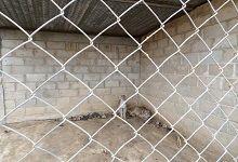 Animales permanecían en zoológico clandestino. Crédito: MINEA
